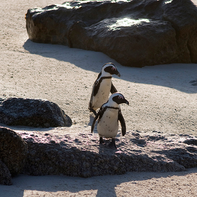Cape Point Tours of the Cape Peninsula