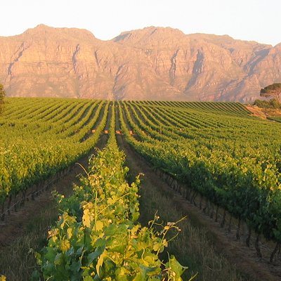 Cape Town Wine Tours