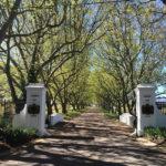 Cape Town Winelands Tours